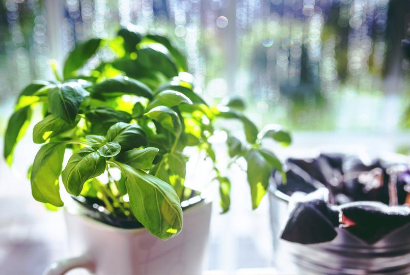 window-herbs
